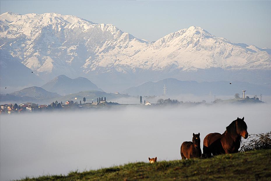 caballos-montes-nevados